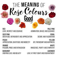 Rose Color Chart Meanings | flower meanings | Rose color meanings, Yellow rose meaning, White ...
