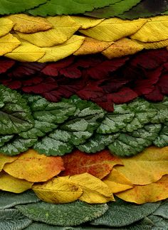 Layers of Leaves; by horticultural art Autumn Trees, Autumn Leaves, Leaf Photography, Wedding Tattoos, Tree Leaves, Leaf Art, Environmental Art, Outdoor Art, Animal Design