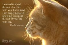 "Wow - this is SO true! - NEW book from Marianne Soucy, founder of Healing Pet Loss: ""From Grief to Gratitude after Pet Loss - Healing Messages and Guidance from Pets in the Afterlife"" Crazy Cat Lady, Crazy Cats, I Love Cats, Cute Cats, Animals And Pets, Cute Animals, Pet Loss Grief, Loss Of Pet, Pet Remembrance"