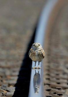 Blog Medioambiente.org: En la cuerda floja
