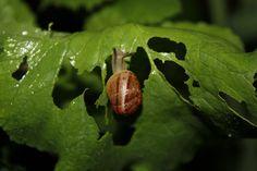 My snails :)