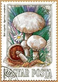 Timbres champignon : 2.75€ les 50 sur Philatéma
