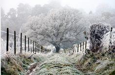 Frosty English Morning