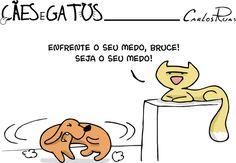 Cães e Gatos 5