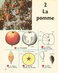 Leçons de choses 1964 : la pomme