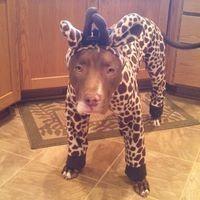 The giraffe game has went too far