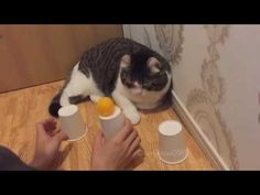 Cute cat shows off incredible skills with cup and ball game
