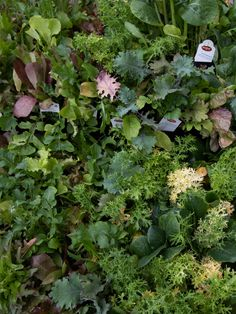 FInd out when to plant veggies from seed or start. When To Plant Vegetables, Planting Vegetables, Veggies, Vegetable Planting Calendar, Nursery Supplies, Fall Planting, Seeds, Green, Plants