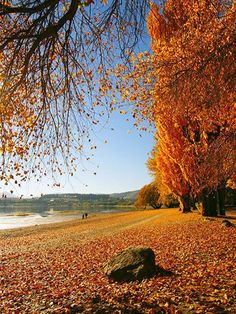 Kate Autumn Scenery Photography Backdrops,Autumn Scenery Yellow Leaves Photography Backdrop For Photographers,No Winkle Seamless Collapsible Photo Studio Background