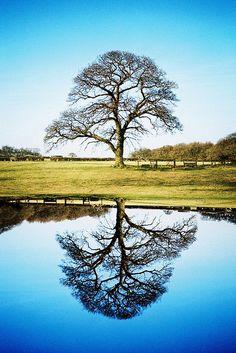 Oak tree / oak tree    LOMO LCA+, splitzer, Lomography X-Pro Chrome 100, cross processed