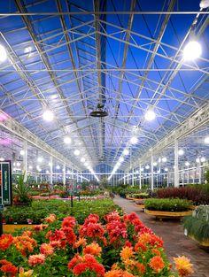 Our open skies building - enabling late night shopping for your favourite plants Garden Nursery, Plant Nursery, Garden Shop, Home And Garden, Supermarket Design, Flower Nursery, Garden Centre, Flower Show, Houseplant