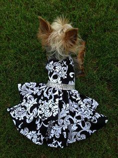 Custom Made Dog Pet Clothing Dress - Black Scroll on Etsy, $27.00