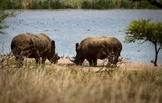 The Tala Private Nature Reserve is a 3000 hectare area containing a plethora of plains game, rhinos and hippos – although you won't find the Big 5 here, many di… Private Games, Kwazulu Natal, Ice Climbing, Game Reserve, Nature Reserve, Rafting, Coast, Africa