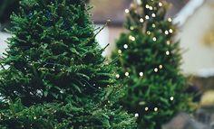 Árbol de navidad Artificial o natural?
