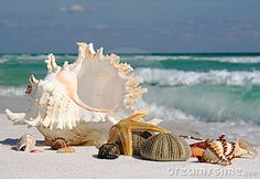 Sea Shells, Sea Star and Sea Urchin on the Beach by Sdbower, via Dreamstime