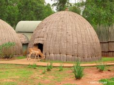 Beehive huts Mlilwane Wildlife Sanctuary Swaziland - park ideal for family friendly activities