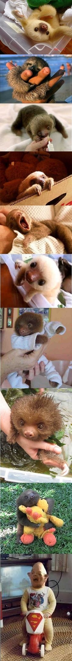 Baby Sloths...I think I laughed at this end of this just a little too much!