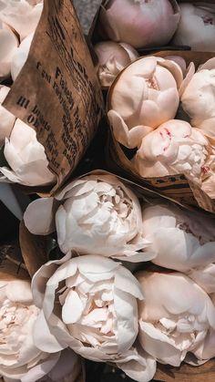 My favourite flower, pretty peonies Frühling Wallpaper, Flower Phone Wallpaper, Iphone Background Wallpaper, Pastel Wallpaper, Aesthetic Iphone Wallpaper, Aesthetic Wallpapers, Classy Aesthetic, Beige Aesthetic, Flower Aesthetic