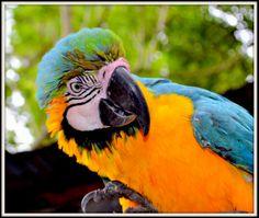 #elfoton14 @elfoton_es www.elfoton.com #categoría #Fauna Usuario: FORISA (COLOMBIA) - GUACAMAYA - Tomada en San Gil el 20 12  2014
