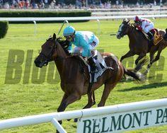 75 Best Lady Eli Images Horse Photos Lady Horses