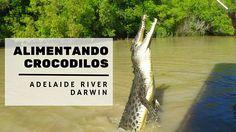 Alimentando crocodilos de 6 metros