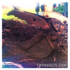 "The Ditch Witch goes ""Nom Nom Nom!"" #Photofriday15 #chongolio"