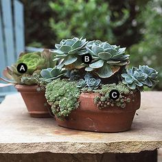 succulent container garden, some of my Gramma's favorite plants!