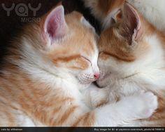 Cats (Cuties )