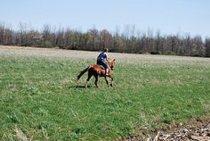 I want to gallop so bad right now!!! I miss this! (Winter, you can move on now, k?)