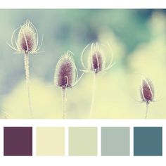 Novella | Photography: Colour Inspiration | Kitchener / Waterloo Photographer