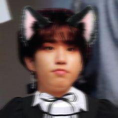 Smut Fanart, Pop Cat, Cat Icon, Cat People, Hani, Ji Sung, Kpop Aesthetic, K Pop, Boyfriend Material