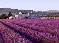 Photo: by Andyblind. Lavender Field in Provence France. Gorgeous lavender field in Provence, France. Oh The Places You'll Go, Places To Travel, Places To Visit, French Lavender Fields, Beautiful World, Beautiful Places, Belle France, Provence France, South Of France