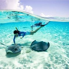 Sting Ray City, Cayman Islands  For a great oceanfront rental visit http://rumpointretreat23.com/