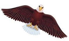 Just in.... Wildlife American... and Flying out the door http://www.offthewalltoysandgifts.com/products/wildlife-american-bald-eagle-bird-wing-flapper-kite-55-wingspan?utm_campaign=social_autopilot&utm_source=pin&utm_medium=pin