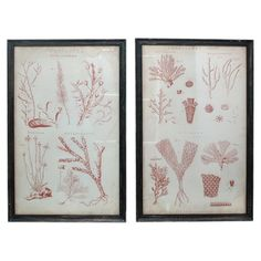 Perfect as a focal point in your study or arranged with like designs, this eye-catching framed print showcases a marine motif.   Product...