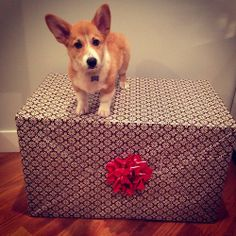 Cheddar is ready for the holidays! Submitted bycheddar.is