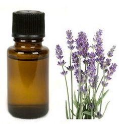 Etherische olie  Lavendel en citrus geuren zorgen ervoor dat wespen wegblijven. Een beetje olie in die geur houdt jouw tuin wesp-vrij!