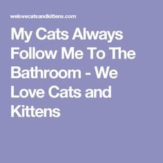 My Cats Always Follow Me To The Bathroom - We Love Cats and Kittens
