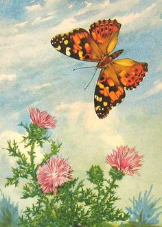 Vintage Butterfly Book Plate  By ninainflorida