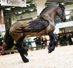 Horse with Wings ...Fantastic <3
