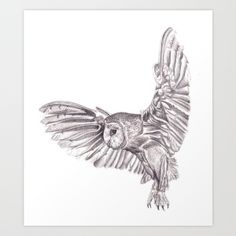 Flying Owl Pencil Drawing