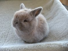 IT'S SO FLUFFY LET ME HAVE IT