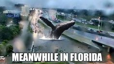 Crazy photos of Meanwhile in USA. A handpicked collection of hilarious photos. The best funny pictures. Craziest and weirdest things caught Funny Photos, Best Funny Pictures, Funny Jokes, Hilarious, Strange Photos, Lol, Super Funny, Growing Up, Weird