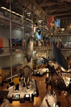 The Animal World at the National Museum of Scotland is a favourite with children! - via www.museumdiary.com