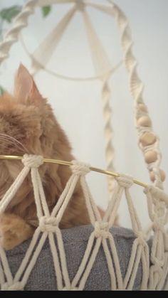 Diy Cat Hammock, Diy Cat Bed, Macrame Supplies, Macrame Projects, Diy Crochet Cat Bed, Cat Room, Macrame Plant Hangers, Macrame Design, Macrame Patterns