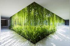 зелёные стены в саду: 12 тыс изображений найдено в Яндекс.Картинках