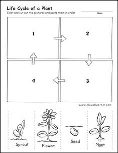 plant life cycle first grade worksheet - Modern Seeds Preschool, Preschool Science, Preschool Lessons, Sequencing Activities, Science Worksheets, Plant Life Cycle Worksheet, Plant Lessons, Plant Science, Parts Of A Plant