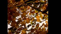 SOOTHING AUTUMN WALK - BESÄNFTIGENDER HERBSTSPAZIRGANG by Stefanie Neumann:  A walk, especially on a golden autumn day, does have something soothing, doesn't it?/ Ein Spaziergang, besonders an einem goldenen Herbsttag, hat etwas Besänftigendes, oder?  #KBFPhotography #KokopelliBeeFree