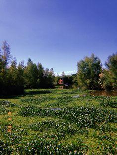 Vineyard, Outdoor, Argentina, Outdoors, Vine Yard, Vineyard Vines, Outdoor Games, The Great Outdoors