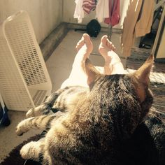 #ShareIG Auringon ottoa kissojen kanssa.